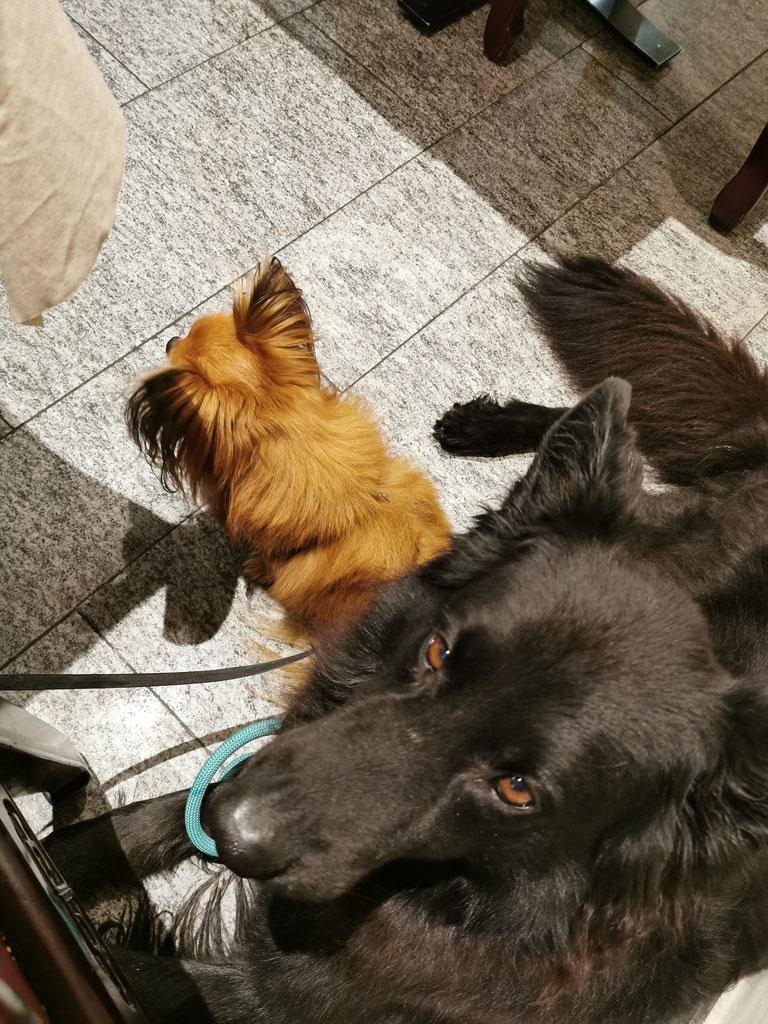 Alltagstraining für Hunde im Einzelunterricht