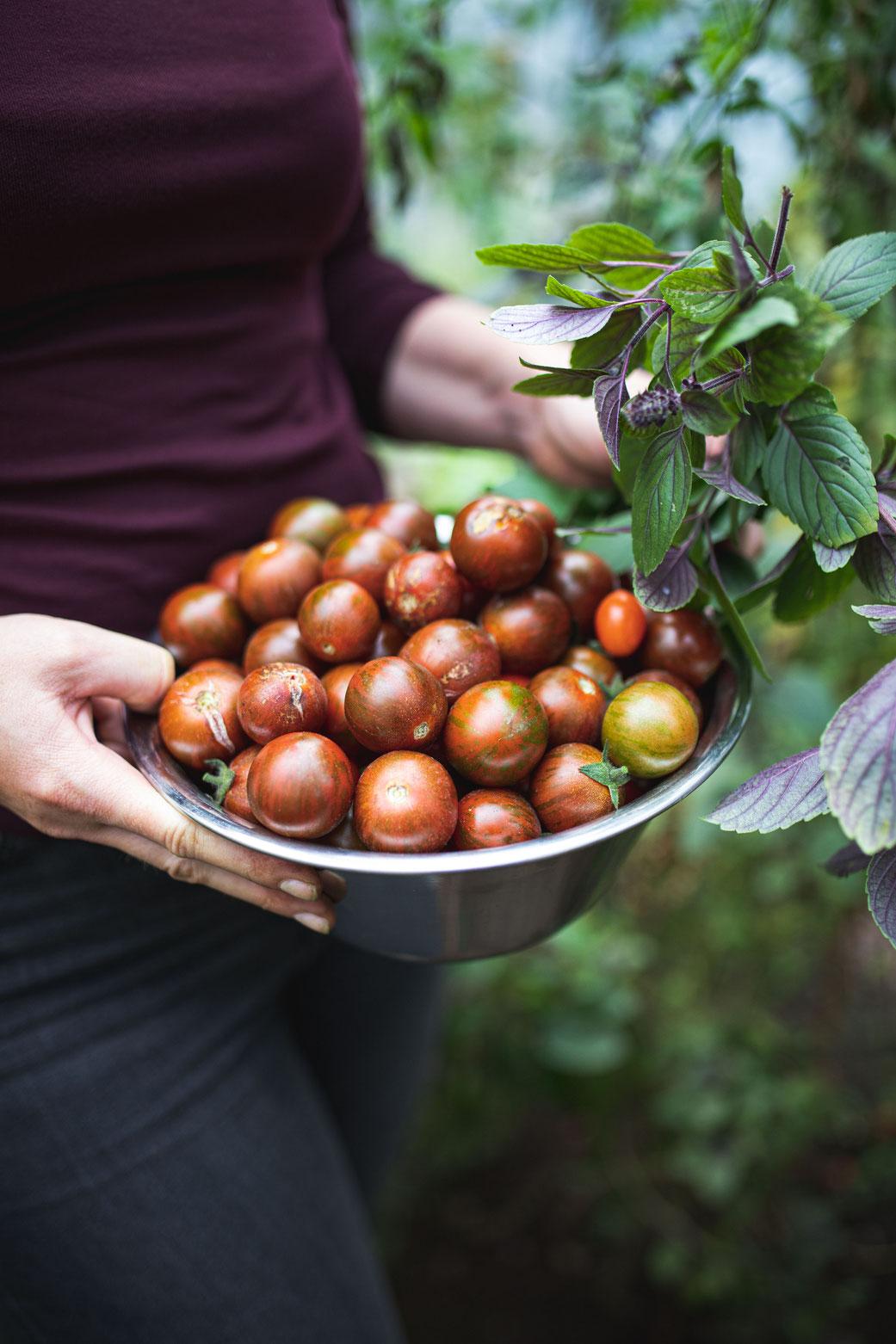 In diesen Tomaten steckt ein ganzer Sommer