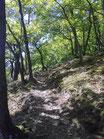Schöner Trail bei Veldenz