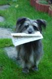 Lady bringt die Zeitung