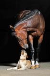 Tierheilpraxis Pferd und Hund