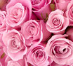 Luxuspflege - Rose