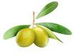 Olivenöl BIO