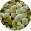 Bead Mill Yeast RNA Purification Kit