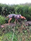 Anti-Jagd-Training