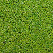 Farbgranulat 1-2mm Lindgrün (Beutel 2,4kg)