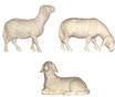 Schafe zu Krippenfiguren natur