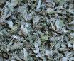 Artichaut - Feuilles / Artischocke - Blätter