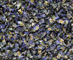 Violette (Pensée sauvage) - Fleurs / Veilchen (Stiefmütterchen) - Blüten