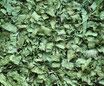 Plantain lancéolé - Feuilles / Spitzwegerich - Blätter