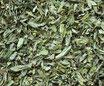 Basilic - Feuilles / Basilikum - Blätter
