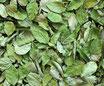 Myrtille - Feuilles / Heidelbeerblätter