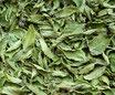 Menthe marocaine (nanah) - Feuilles / Marokkanische Minze - Blätter
