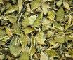 Mélisse - Feuilles / Zitronenmelisse - Blätter