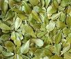 Busserole - Feuilles / Bärentraube - Blätter