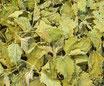 Ortie - Feuilles / Brennessel - Blätter