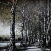 Sous bois Périgord - VENDU -  Thierry Sellem