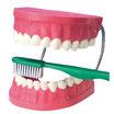 Dentier d'apprentissage