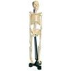 Squelette maniable