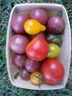 Tomates cocktail bio (mélange)