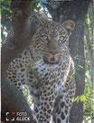 Foto Glück Fleecedecke Leopard