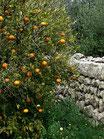 Mandarina zumo