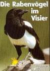 Die Rabenvögel im Visier