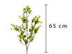 Eucalyptus C/fiori AF010