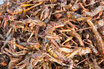Sauterelles grillées 30 g