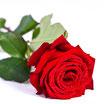 SINGLE RED NAOMI