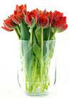 Vase & Windlicht Familie