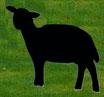 Schwarzes Schaf, stehend