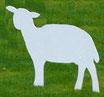 Weißes Schaf, stehend