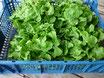Salat/ES,FR