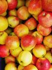 Äpfel  Boskoop / DE