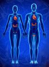Hormonelle Erkrankungen homöopathisch behandeln