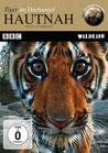 Tiger im Dschungel ame