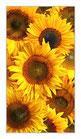 """Infrarot-Glasbildheizung """"Sonnenblumen"""" 600 Watt, 60x110cm"""
