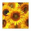 """Infrarot-Glasbildheizung """"Sonnenblumen"""" 300 Watt, 60x60cm"""