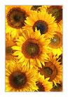 """Infrarot-Glasbildheizung """"Sonnenblumen"""" 450 Watt, 60x90cm"""