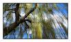 """Infrarot-Glasbildheizung """"Trauerweide"""" 600 Watt, 110x60cm"""