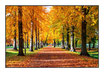 "Infrarot-Glasbildheizung ""Herbst"", 450 Watt, 90x60cm"
