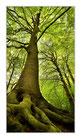 """Infrarot-Glasbildheizung """"Baum"""", 600 Watt, 60x110cm"""