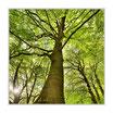 """Infrarot-Glasbildheizung """"Baum"""", 300 Watt, 60x60cm"""