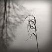 """In The Wind"" Art Print"