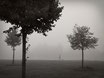 Walking In Fog - Art Print