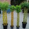 Датские корни (Original 125cm)