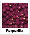 25 Sicherheits-perlen purpurlila