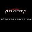 "ADACTA ""Bred for Perfection"""