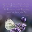 """Durch die Lüfte möcht ich schweben.."""" Motiv Schmetterling im Lavendel Text C. Scharf"""